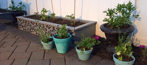 Spruce up the Garden with Raised Garden Beds / nuild, paint, stencil seal by Just the Woods