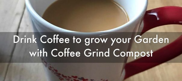 garden-with-coffee-grind-compost