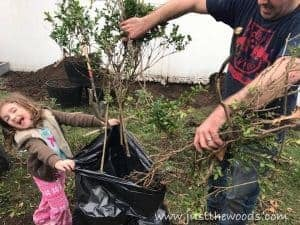 bag-up-cut-up-bushes, bagging tree branches, build a shed