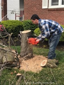 cut-down-tree-from-top-to-bottom, chop down a tree, how to cut down a tree