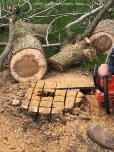 cut-stump-in-cross-hatch, chop down a tree, how to cut down a tree