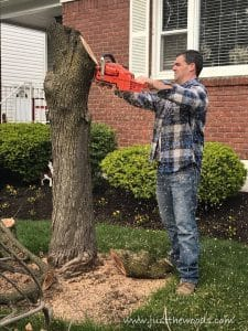 cut-tree-after-removing-branches, chop down a tree, how to cut down a tree