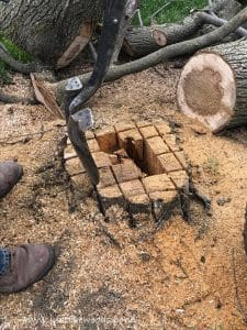 dig-rotten-tree-root, chop down a tree, how to cut down a tree