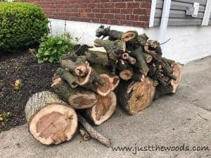 firewood, chop down a tree, how to cut down a tree