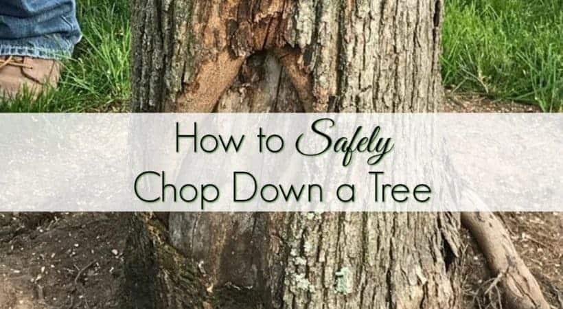 How to Safely Chop Down a Tree