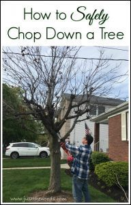 how-to-safely-chop-down-a-tree