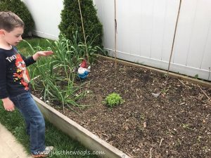 kids-know-garden, gardening with kids, backyard garden, how to garden with kids