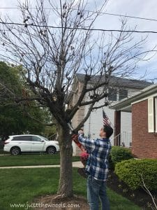 remove-small-branches, chop down a tree, how to cut down a tree