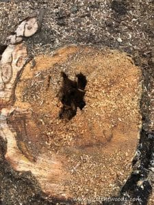 rotted-tree-stump, chop down a tree, how to cut down a tree