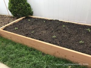 tomato-plants, gardening with kids, backyard garden
